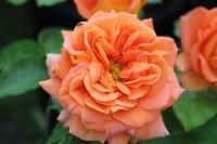 orange-vaza