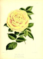floralmagazineco11872-lord-eldon