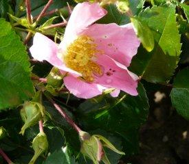 pink-basino.jpg