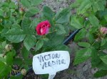victor-verdier-8czerwiec-2008-017.jpg