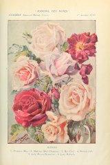 jrozne-roze-journaldesroses.jpg