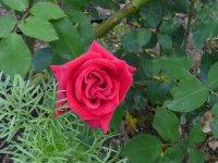 fontein10-czerwiec-2008-014.jpg