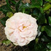 garden-of-roses1a