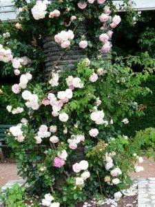 pierre-de-rosard-6a