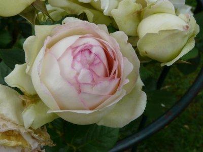 pierre-de-rosard1a