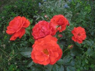 clos-fleuri-vermillion-delmalor-2005