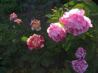 ferdinand-pichard-i-mauris-utrillo
