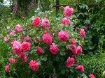 rosarium-uetersen-gubala.jpg