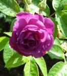 rhapsody-in-blue-ogrod-botaniczny-warszawa.jpg