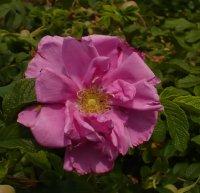 pink-roadrunner-3
