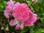 weneda-ogrod-botaniczny-warszawa-220.jpg