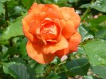 westerland-ogrod-botaniczny-warszawa-215.jpg