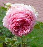 wlzertraum-ogrod-botaniczny-warszawa-224.jpg