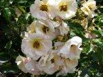 odense-by-roses-powsin.jpg
