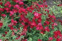 red-cascade-1368