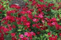 red-cascade-1369
