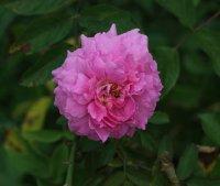 the-mayflower-1476