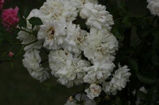 white-dorothy-perkins