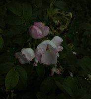 jablonovy-kvet-755
