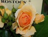 hansestadt-rostock-a