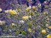 flower-1flowers-hyde-hall-england-rhs-garden-gardens-pink-rosa-sc.jpg