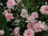 home-garden-1515