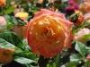 garden-delight