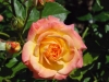 garden-delight3