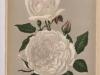 charlotte-gillemot-1895-8