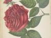 com-felix-faure-1900-10