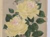 comtesse-deu-1896-6