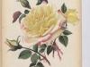 comtesse-julie-hunyadi-1890-4