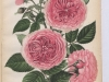 decoration-de-geschwind-1896-4