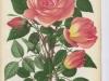 docteur-grandvilliers-1892-8
