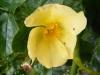 bloomfield-dainty