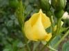 bloomfield-dainty1