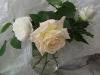 bielszy-odcien-bieli