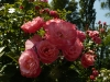 mein-schoner-garden-5