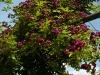 violette-turbat-1821