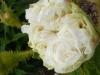blanche-simon