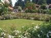 włoski ogród różany