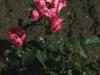 alain-ruzowy-377