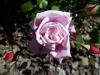 blossom-time