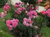 generation-jardin-bagatelle-823