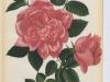 archiduchess-maria-immaculata-1887-2