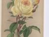 azelie-imbert-1883-7
