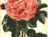 baron-prevost-jdr-1879-10