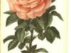 baronne-adolphe-de-rotshild-jdr-1879-5