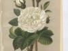 blanche-moreau-1885-9