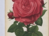 camile-bernardin-jdr-1880-9